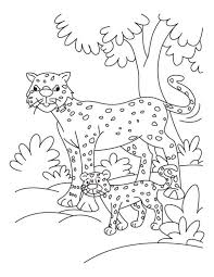 cheetah print coloring pages kids animal coloring pages