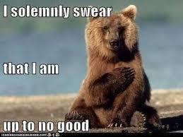 Bear Meme - bear meme album on imgur