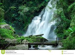 tropical rainforest native plants tropical rain forest landscape with pha dok xu waterfall and