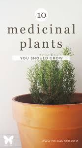 38 best images about gardening on pinterest gardens medicinal