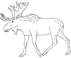 moose template moose coloring pages getcoloringpages
