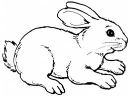 cute bunny coloring page free 471299 coloring pages for free 2015