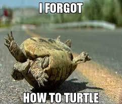 Turtle Meme - turtle meme by lt fluffels memedroid