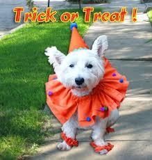 Dog Halloween Costumes 91 Halloween Costumes Rit Dye Images Rit Dye