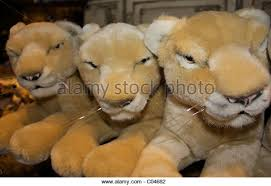 lions for sale lions cubs toys stock photos lions cubs toys stock images alamy