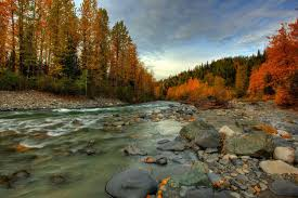 Alaska forest images Alaska autumn forest river feed stones hd wallpaper jpg