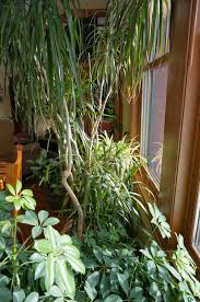 indoor plants safe for cats 9245