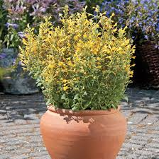 image of garden flowers fafardwater wise container gardening