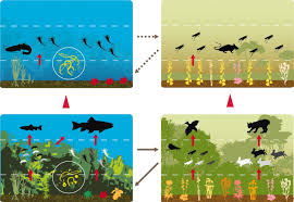 the functions of biological diversity in an age of extinction