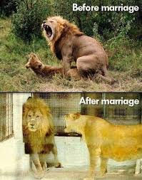 Before And After Meme - the funniest before and after memes ever
