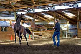 mustang adoption pet learning the language of mustangs oregonlive com