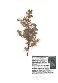 interior plant species cultivating forest stewardship