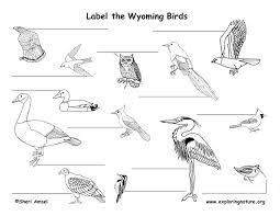 Wyoming birds images Wyoming habitats mammals birds amphibians reptiles jpg