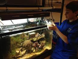 tanks in classrooms setting up an educational aquarium