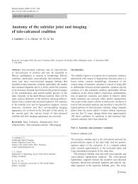Talar Coalition Anatomy Of The Subtalar Joint And Imaging Of Talo Calcaneal