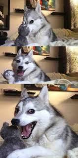 Dog Jokes Meme - dog joke blank template imgflip