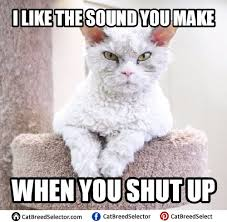 Angry Cat Meme - best angry cat meme funny cute angry grumpy cats memes pinterest