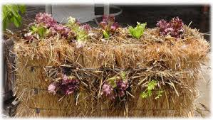 straw bale gardening guide the micro gardener