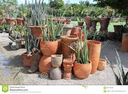 pots for succulents for sale group of cacti and succulents growing in garden stock image