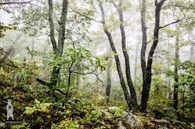woodland home decor forest landscape photo print nature