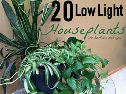 best indoor plants for low light 20 low light indoor plants that are easy to grow low light