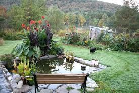 wonderful modern patio ideas with small koi fish pond and beauty