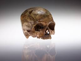 turners black friday inside the quest to return nat turner u0027s skull to his family