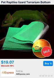 die besten 25 lizard terrarium ideen auf pinterest bartagamen
