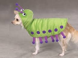 Small Dog Costumes Halloween 562 Halloween Puppies Costume Images