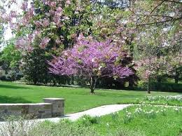 small flowering trees for small gardens small flowering trees for