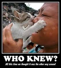 Asian Dog Meme - cat eats asian a photo on flickriver