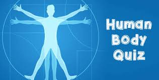 Online Human Body Human Body Quiz For Kids With Answers