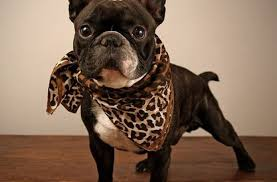 tag cute puppy pictures print puppy photograph diva