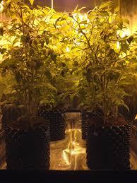 the grow room special premium 3 u0027x3 u0027 grow tent set up