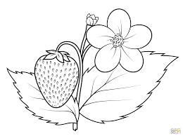 strawberry coloring page strawberry fruits coloring pages simple