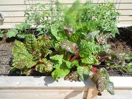 houston vegetable garden growing vegetable gardens in houston