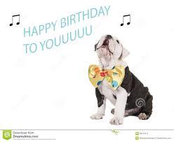 singing birthday birthday card with bulldog singing stock photo 58512472