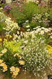 garden flower lifestyle