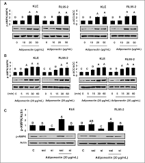 direct role of adiponectin and adiponectin receptors in