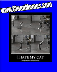 Funniest Memes 2013 - footloose kitty clean memes the best the most online