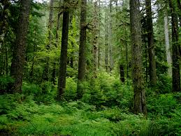 5 Dominant Plants In The Tropical Rainforest The Different Types Of Forests Everything You Need To Know