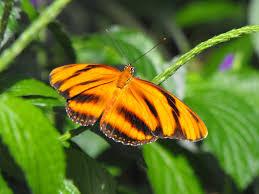 free images nature outdoor leaf flower wildlife orange