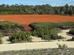 Australian Garden Ideas by Australian Garden Enviromum U0027s Blog