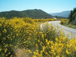 native alternatives to invasive plants avoiding invasive plants plant california