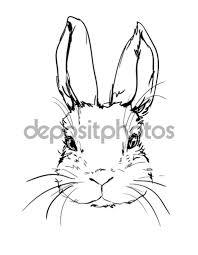 hand drawn rabbit sketch u2014 stock vector alsoush 128936948
