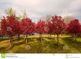 colorful forest in spring season stock photo image 52654186