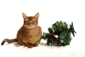 abyssinian cat and mini christmas tree stock 2 by furlined on
