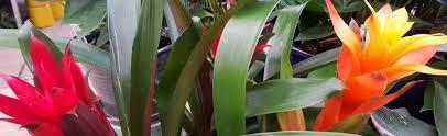 bromeliad portland nursery