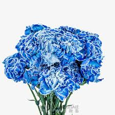 blue carnations carnations united wholesale flowers