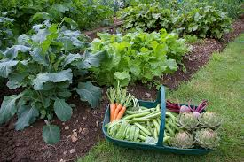 10 Vegetables U0026 Herbs You by 28 Vegetables That Grow In Partial Shade Small Footprint Family